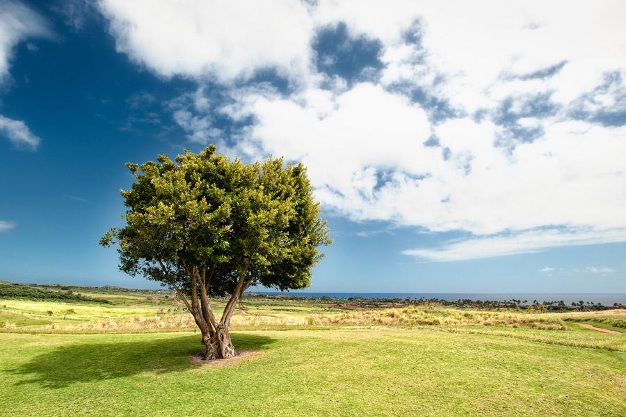 青い空と緑の大地のトップ画像