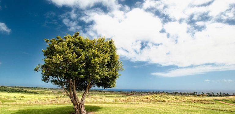 🌤青い空と緑の大地